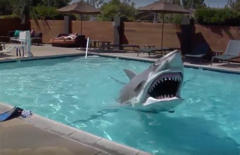 Animatronic Shark Test In A Hotel Swimming Pool Geekologie
