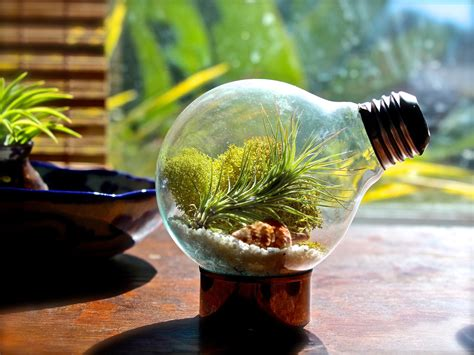 indoor mini greenhouse how to a terrarium take a look at these 7 adorable