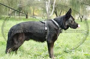 Supercool German Shepherd Dog Leather Harness  H1bw 1019