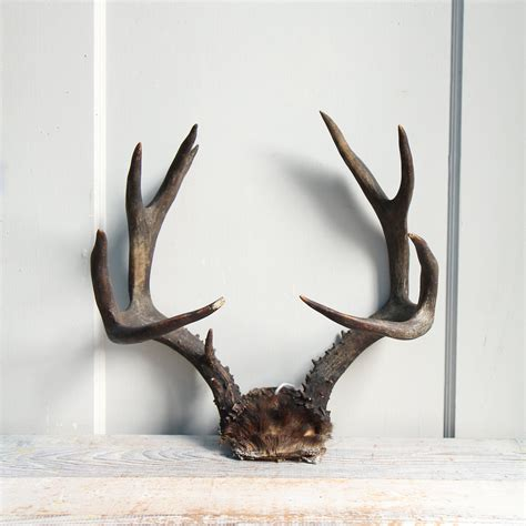 vintage deer antler rack horns natural decor jewelry