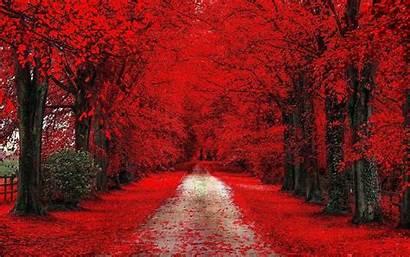 Trees Fall Road Path Dirt Desktop Wallpapers