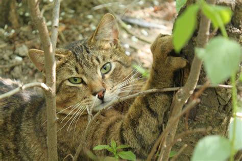 Ist Die Forsythie Für Katzen Giftig? » Die Risiken