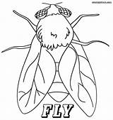 Fly Coloring Pages Printable Sheet Insect Getcolorings sketch template