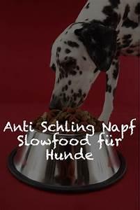 Anti Schling Napf Hund : der anti schling napf sorgt f r mehr genuss beim hund hunde hunde ern hrung und hundegesundheit ~ Watch28wear.com Haus und Dekorationen