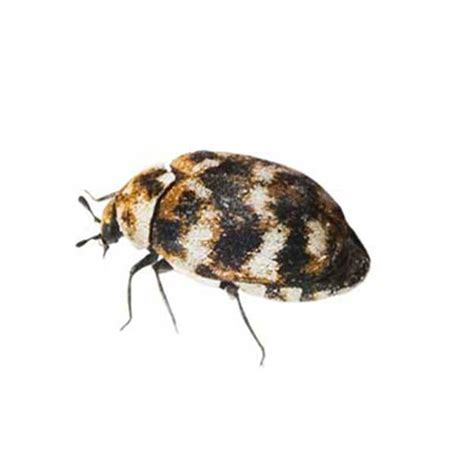 pest identification library id  pest  las vegas