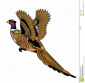 Pheasant bird flying up stock vector. Image of colorful ...