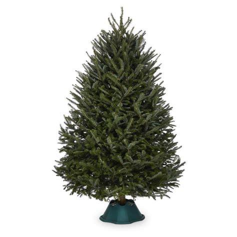 Shop   Ft Fresh Fraser Fir  Ee  Christmas Ee   Tree At Lowes Com