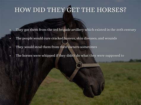 horses war were why they did