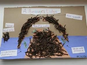Image Result For Beaver Den Craft