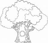 Tree Coloring Pages Oak Colouring Trunk Drawing Outline Printable Without Leaves Banyan Drawings Draw History Getcolorings Getdrawings Odd Paintingvalley Popular sketch template