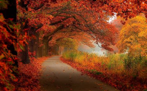 High Resolution Fall Foliage Pictures Autumn Foliage Wallpaper