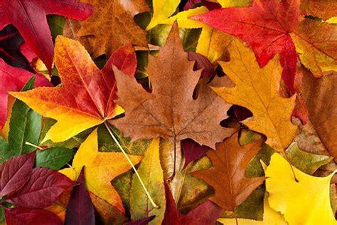 chambre couleurs chaudes tableau design feuilles mortes izoa