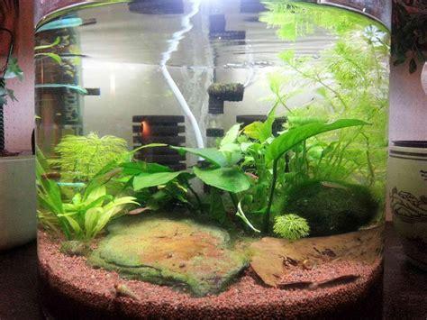 aquarium boule pas cher
