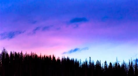 green forest trees  pink  blue sky  sunset