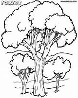 Forest Coloring Pages Print Nature Colorings sketch template