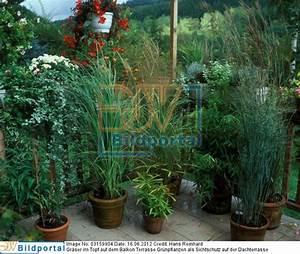 Grünpflanzen Im Topf : details zu 0003159904 gr ser im topf auf dem balkon ~ Michelbontemps.com Haus und Dekorationen