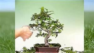Apfelbäume Schneiden Wann : bonsai schneiden youtube ~ Lizthompson.info Haus und Dekorationen