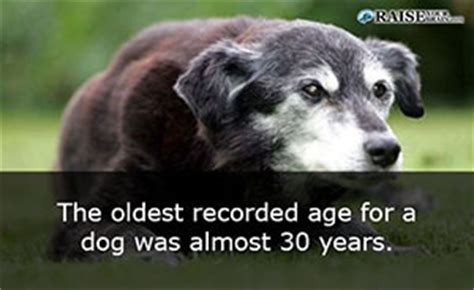 weird animal facts  dogs raise  brain