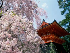 buddhist temple overnight japan guide japanese guest