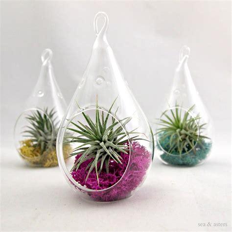 Beautiful Plant Terrariums Home Designing