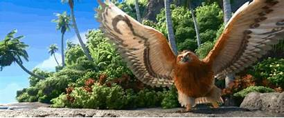Moana Disney Maui Bird Movies Movie Demigod