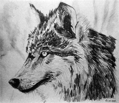 wolf drawings pencil drawings sketches freecreatives