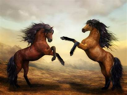 Horse 4k Arabian Wallpapers Artistic Digital Backgrounds