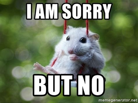 No Meme - i am sorry but no sorry i m not sorry meme generator