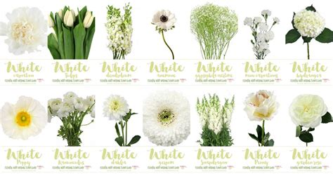 white wedding flowers guide types  white flowers names