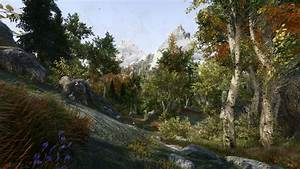 A, View, From, Riften, Forest, At, Skyrim, Special, Edition, Nexus