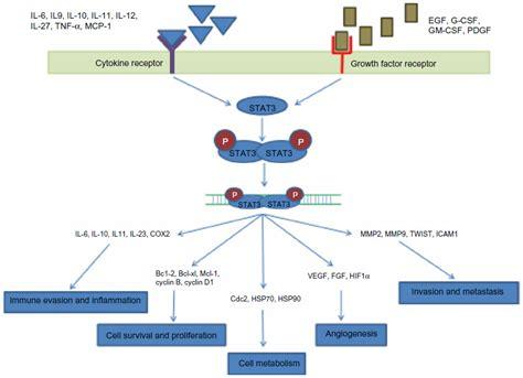 [full Text] Stat3 As An Emerging Molecular Target In