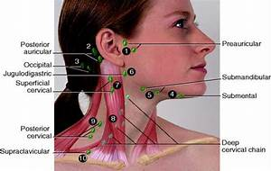 Lymph Nodes Locations In Neck