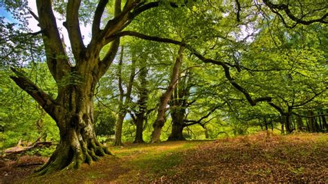 Eight facts about Europe's forest ecosystems — European