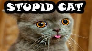 stupid cat cutefuzzyweasel watches i m a stupid cat