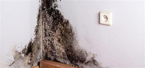 Bautrocknung Feuchte Waende Trocken Legen by Feuchte W 228 Nde Trockenlegen So Geht Es Herold At