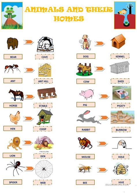 animals   homes worksheet  esl printable