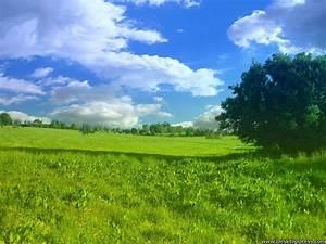 Desktop Wallpapers » Natural Backgrounds » Natural Beauty ...