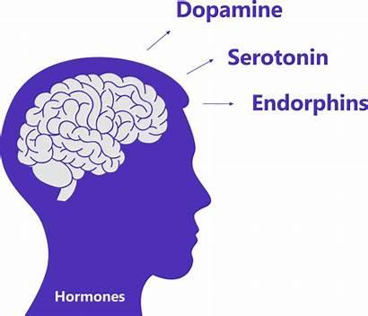 Brain Positive Endorphins Dopamine Thinking Serotonin Benefits