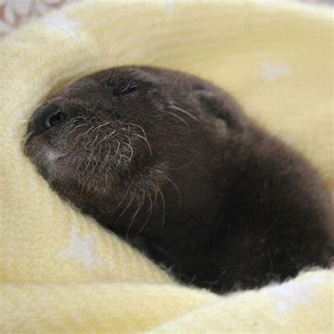 rescued baby otter wave avenue