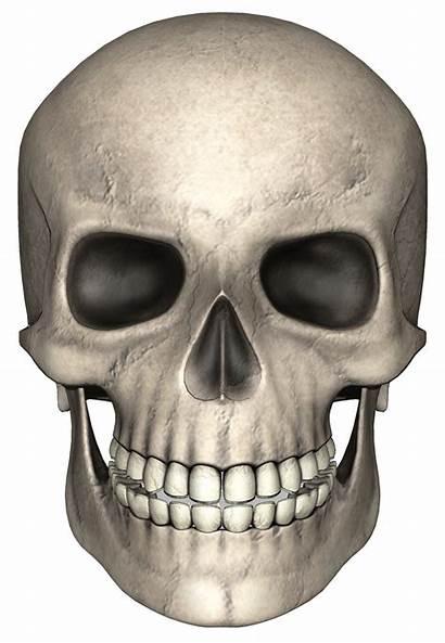 Skull Head Face Half Transparent Bones Background