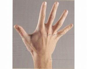 Ipap A U0026p I Test V Surface Anatomy Hand Posterior