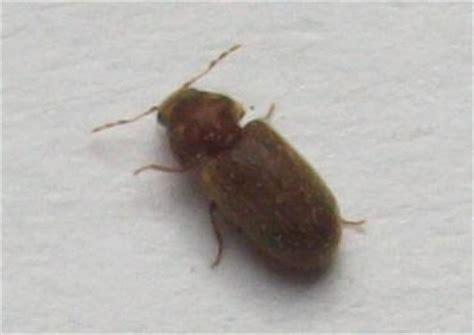 insecte de cuisine insecte inconnu dans ma cuisine aleks47