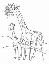 Coloring Giraffe Printable sketch template