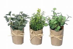 Kräuter Pflanzen Topf : kr uter im topf kunstblume kunstpflanze kr utertopf h 15cm ~ Lizthompson.info Haus und Dekorationen
