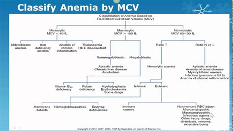 Anemia Classification