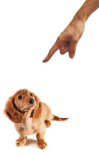 dog trainer anger   time waster quick