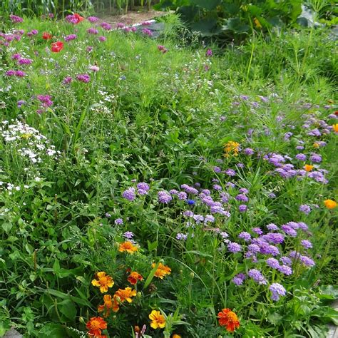 Plant Nectar Plants that Attract Butterflies | Edible ...