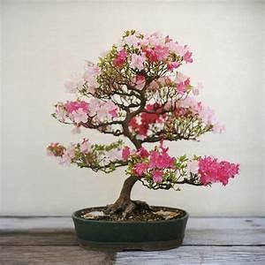 basiswissen uber den bonsai baum geeignete arten und With feuerstelle garten mit bonsai blühend