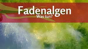 Hausmittel Gegen Fadenalgen Im Teich : was kann ich gegen fadenalgen im teich tun youtube ~ Watch28wear.com Haus und Dekorationen