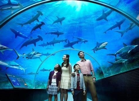 największe oceanarium świata biurorekordow pl
